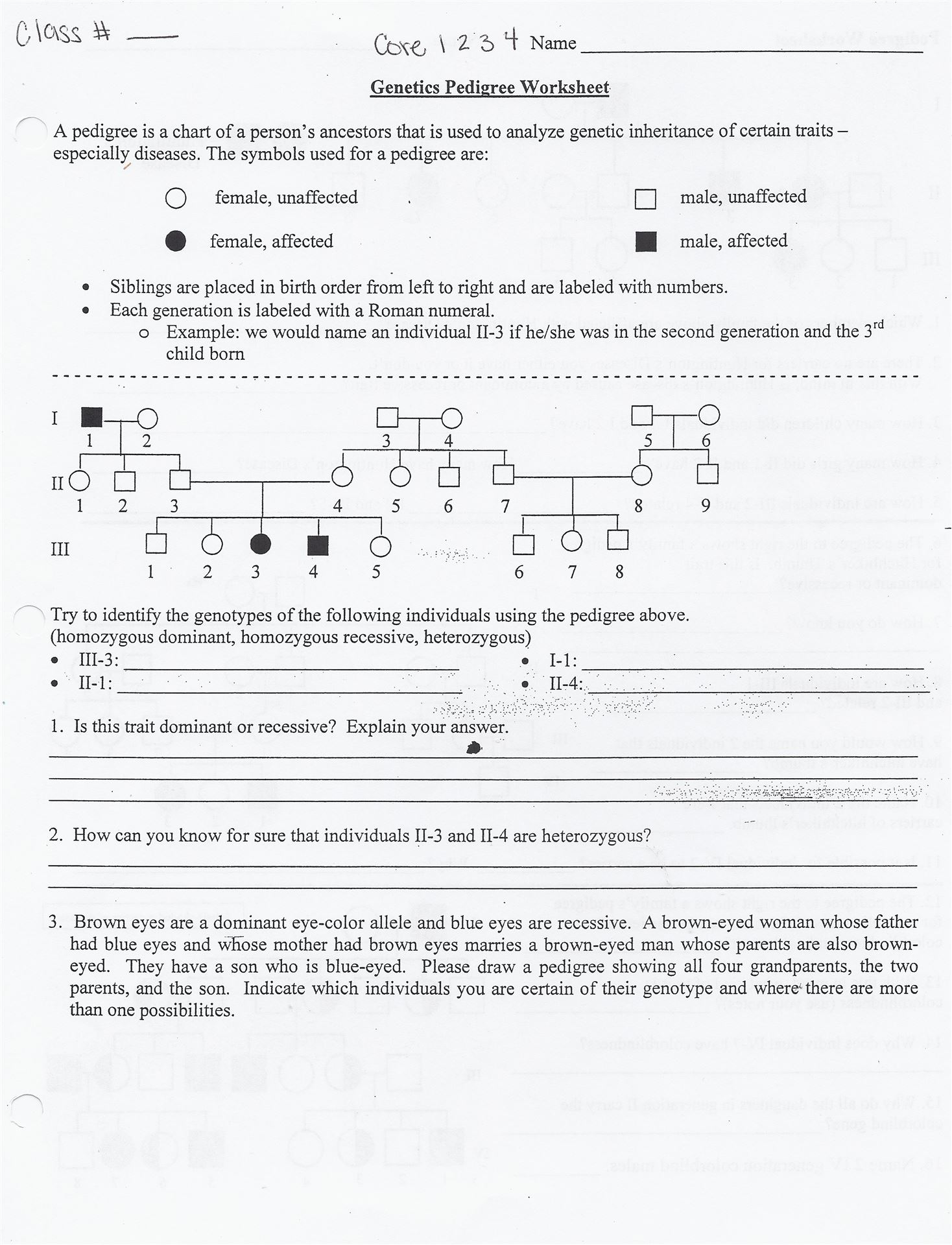Conner Middle School – Pedigrees Worksheet